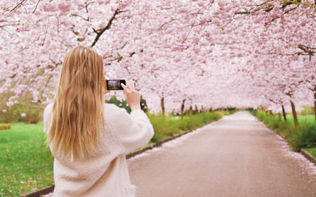 Rear view of a young woman using her mobile phone to capture images of the path and cherry blossoms tree at park. Female taking pictures with her smart phone at spring blossom garden. photo