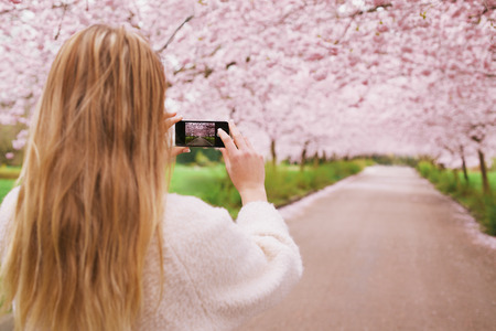 Young woman using her cell phone to capture images of the path and cherry blossoms tree at park. Rear view image of young female taking pictures with her mobile phone at spring blossom garden. photo