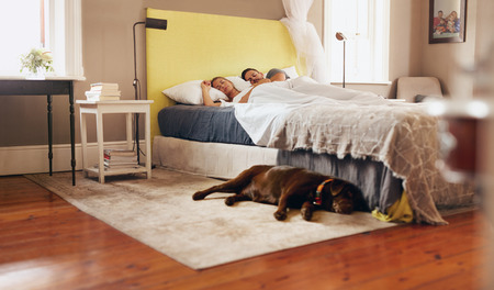 resting: Indoor shot of dog lying on floor in bedroom. Young couple sleeping comfortably on bed.