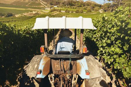 granjero: Vista trasera de un granjero que conduce el tractor a través de viñedos durante la época de la cosecha.