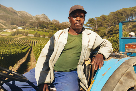 ethnicity: Mature african man at the wheel of his tractor. Farmer is sitting on his tractor in a vineyard.