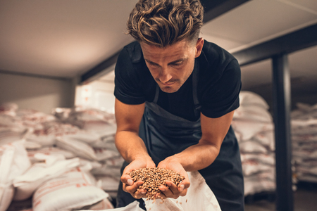 Master brewer checking the barley seeds before they are enter in the system of brewing. Employee examining the barley from gunny bag at brewery factory. Stock fotó