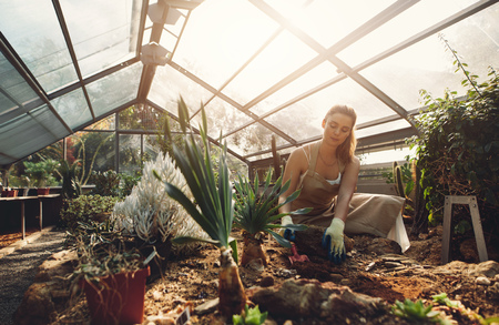 Young woman working in a greenhouse. Female worker planting seedlings in plant nursery. Stock fotó