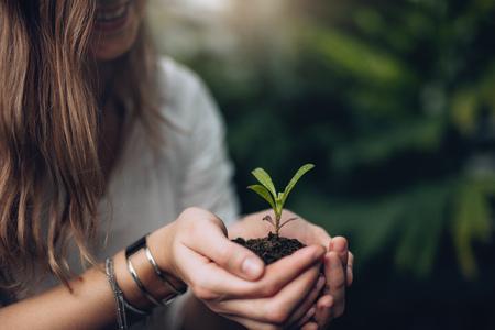 苗を保持している女性の画像をトリミングしました。女性の手の手のひらで土と小さな植物