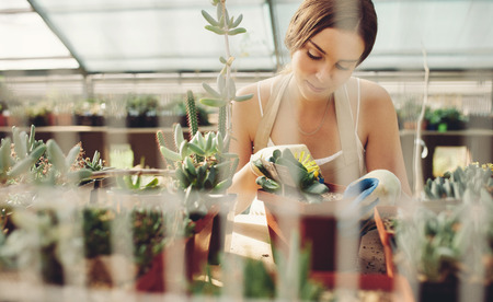 Beautiful young lady in plant nursery working on cactus plants. Female gardener at work in greenhouse. Stock fotó