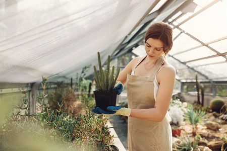 Woman gardener in tropical greenhouse holding a cactus plant. Caucasian female wearing apron taking care of cactus plants at garden center.