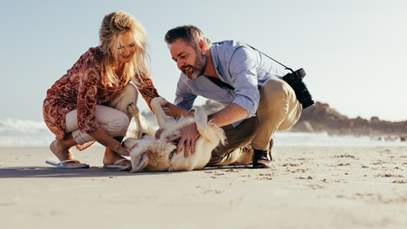Senior couple playing with their dog on the beach. Senior man and woman having fun with their pet dog on the seashore. Stock Photo