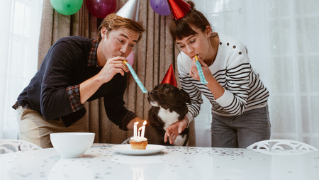 Couple wearing birthday caps and blowing whistle celebrating birthday of pet dog. Man and woman celebrating birthday of dog with candles on a cup cake. 스톡 콘텐츠 - 107381639
