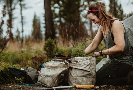 Woman in the forest during sustainable reforestation with pine seedlings. Forester filling bags with pine saplings.