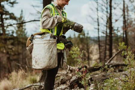 Female tree planter wearing reflective vest standing in forest holding small trees. Woman working in forest planting new trees.