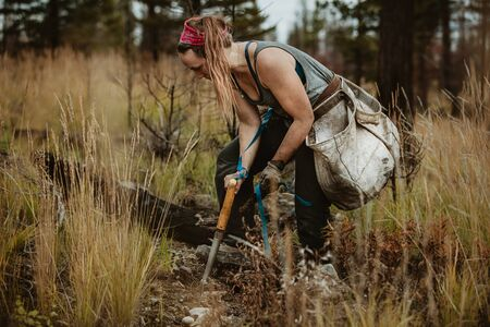 Woman digging hole with shovel to plant saplings in forest. Forester planting new trees in forest.
