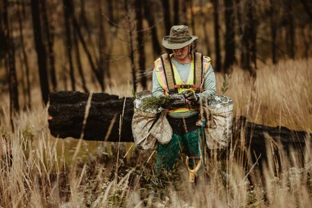 Woman planting new saplings in forest. Female forester planting seedlings in deforested area. 写真素材