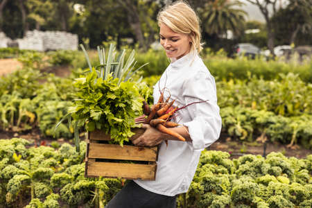 Cheerful young chef carrying a crate full of freshly picked vegetables on an organic farm. Self-sustainable female chef leaving an agricultural field with a variety of fresh produce. Фото со стока