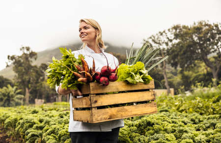 Thoughtful female chef carrying a crate full of freshly picked vegetables on an organic farm. Self-sustainable female chef standing in an agricultural field with a variety of fresh produce.