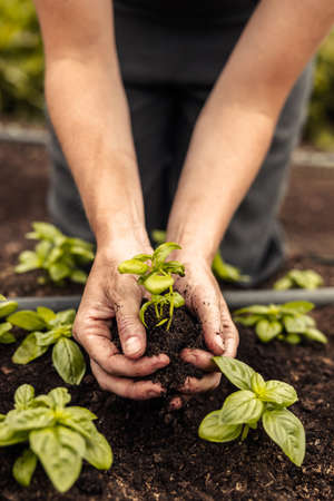 Two female hands holding a green plant growing in soil. Anonymous female organic farmer protecting a seedling in her garden. Sustainable female farmer planting a sapling on her farm.