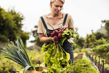 Self-sustainable farmer harvesting a variety of fresh produce on an organic farm. Young female farmer gathering fresh vegetables in her garden. Woman arranging freshly picked vegetables into a crate.