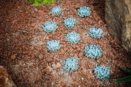 Cactus natural garden environment