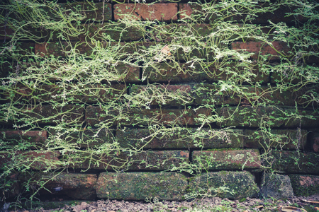 Brick wall with moss old natural texture pattern