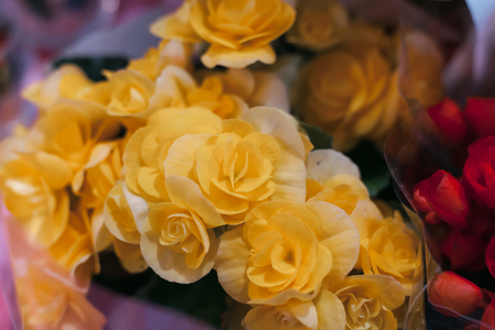 Large bush of yellow roses Stock Photo