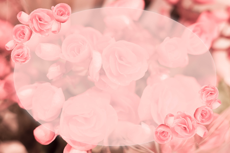 Beautiful pink roses flower border soft background