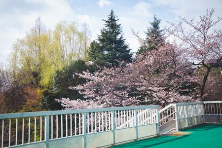 Colourful tree on spring season