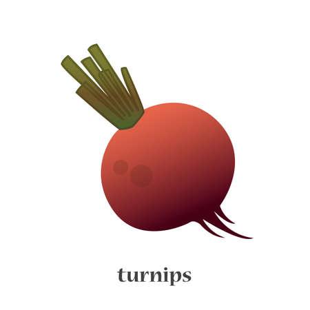 Turnip isolated vector icon