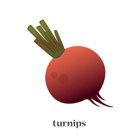 burgundy: Turnip isolated vector icon