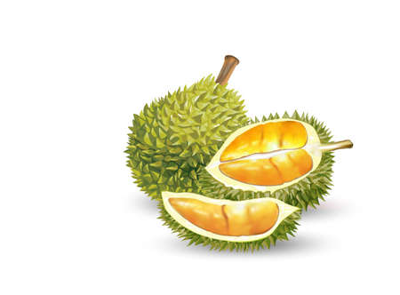 Durian. Set of realistic fruit, whole and sliced peeled