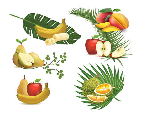 Vector set of realistic fruits: apples, bananas, mango, durian. Illustration of fresh tropical foliage