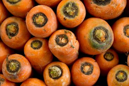 cross view of a bunch of fresh carrots Stock Photo - 9111262