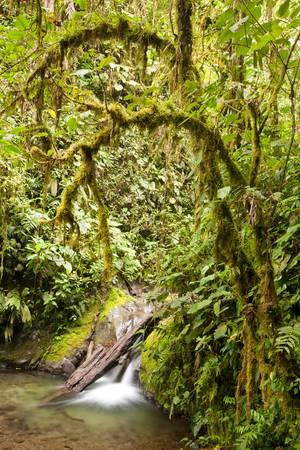 rainforest in Ecuador with intense green tones Stock Photo - 9111490