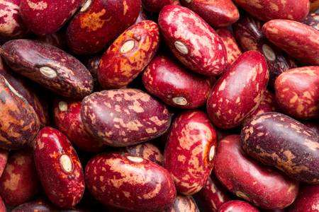common bean: Phaseolus vulgaris, the common bean, is an herbaceous annual plant domesticated independently in ancient Mesoamerica and the Andes, and now grown worldwide for its edible bean, popular both dry and as a green bean.