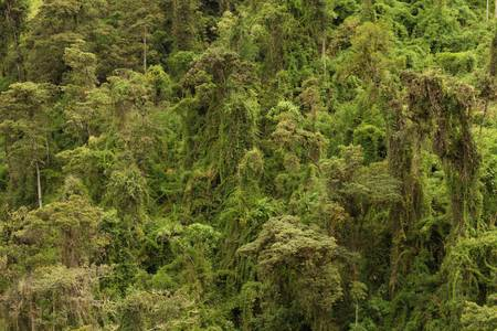 Dense vegetation in a tropical rainforest, high point of view photo