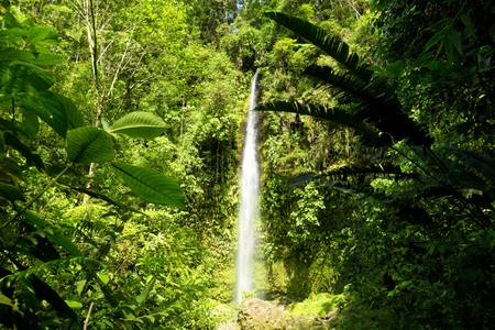 Hola Vida waterfall surounded by dense vegetation, deep down into the Ecuadorian jungle.