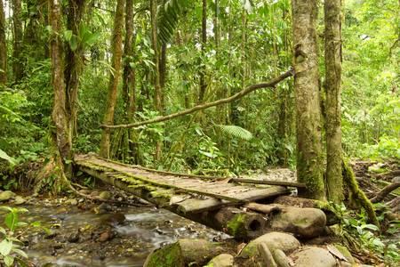 río amazonas: Pequeño puente en la selva ecuatoriana de madera, el único material disponible en esta área.