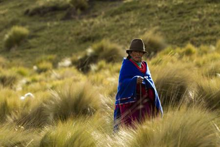 2 november: ALAUSI,ECUADOR - 2 NOVEMBER 2011: Andean peasant dressed in traditional clothes of this region is surrounded by typical alpine vegetation on 2 NOVEMBER 2011