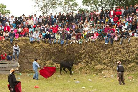 everybody: Lloa,Ecuador - 29 May 2011 :  Very popular bull fighting games where everybody can step in ,during the spring festival. In this type o games the animal is not killed, Lloa,Ecuador - 29 May 2011 Editorial