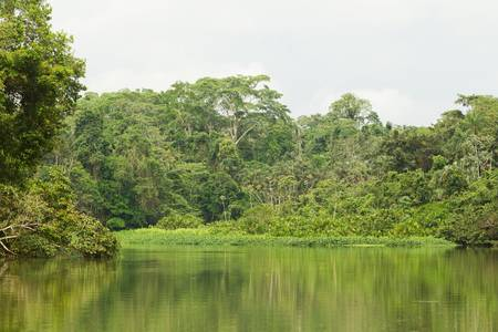 amazon river: Generic jungle vegetation , Limoncocha lagoon Stock Photo