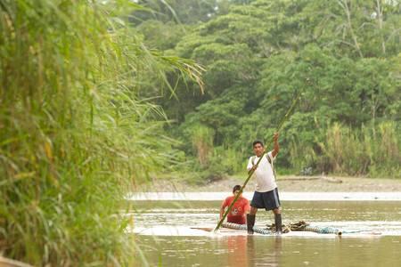 río amazonas: Puni Bocana, Ecuador - Noviembre 16,2012: Grupo de dos mans adulto transportando madera de caoba de madera para el mercado local en Puni Bocana, la Amazonía ecuatoriana en el río Napo
