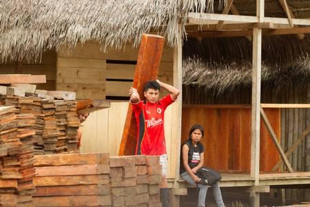 caoba: Puni Bocana, Ecuador - Noviembre 16,2012: obrero apilado de madera de caoba en las pilas, Puni Bocana mercado local, la Amazonía ecuatoriana Editorial