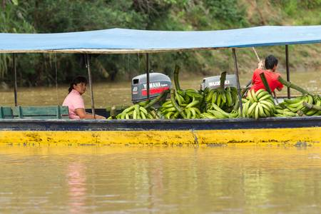 pile engine: Puni Bocana,Ecuador - November 16,2012: Adult woman brings to the local market a pile of green bananas by boat, Ecuadorian Amazonia
