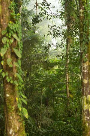 hustá vegetace v Amazonii Reklamní fotografie