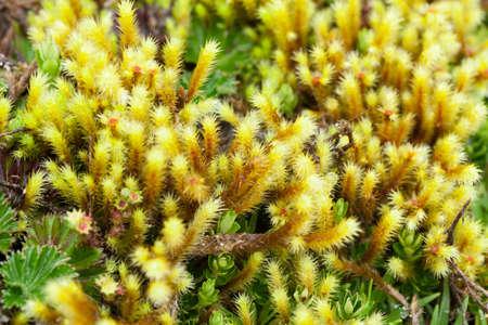 High altitude algae and mosses, Llanganates national park, Ecuador Stock Photo - 21590928