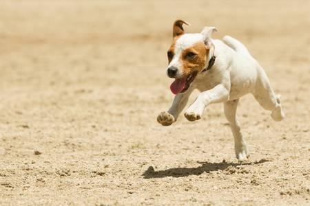 perro corriendo: Algunos perros le gusta correr libre