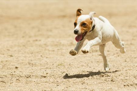 likes: some dogs likes to run free