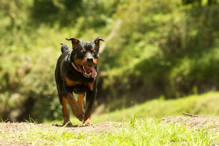 educated: some dogs likes to run free, this is a super educated dog that won the right to be off leash.