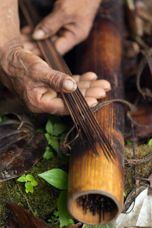 poisoned: indigenous darts poisoned with curare in amazonia Stock Photo