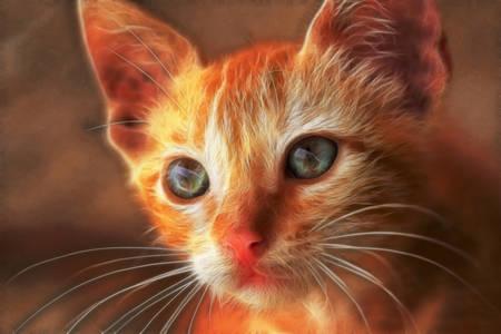 closeup of a young tomcat photo