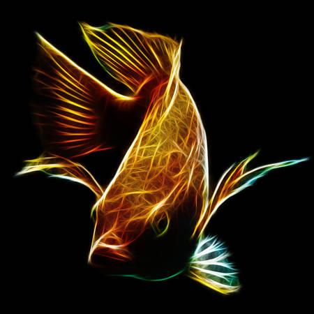 nile tilapia: nile or red  tilapia, oreochromis niloticus, isolated on black, studio aquarium shot. Stock Photo