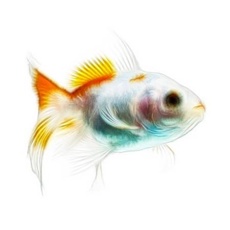 gill: Fractal design of a double tail juvenile goldfish
